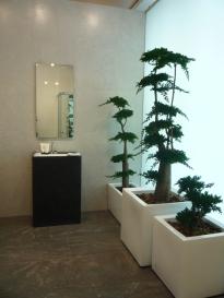 árboles y bonsais estabilizados