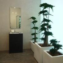 árboles y bonsais estabilizados MND